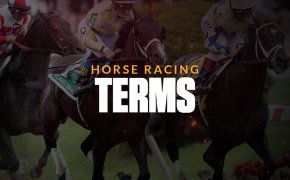 horse racing terms text overlay on horse race image